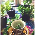 Eco Tea Party 05
